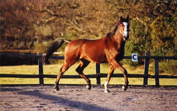 benefits free horse 564x355